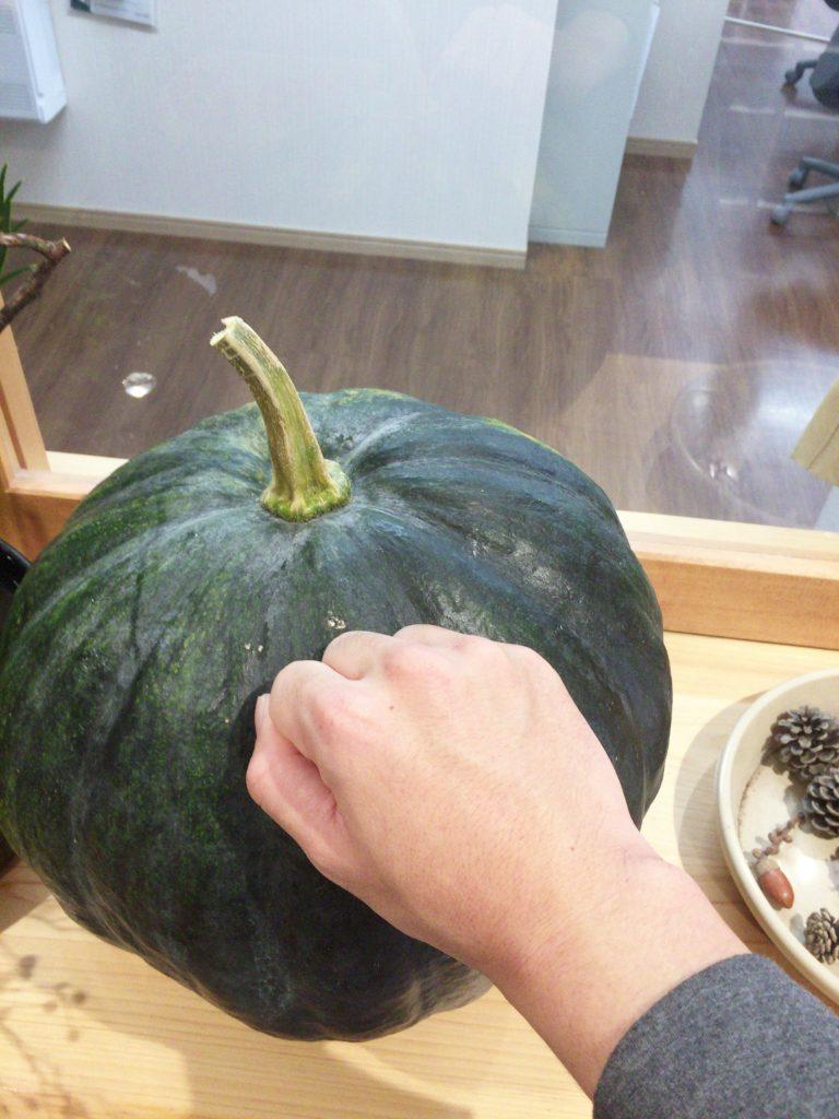 南瓜は自分の拳と比べてもこの大きさです!パンプキン!!
